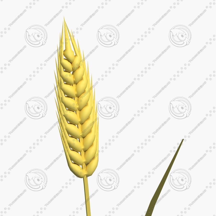 Espiga de trigo royalty-free modelo 3d - Preview no. 4