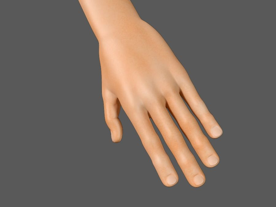 Arm Hand royalty-free 3d model - Preview no. 4