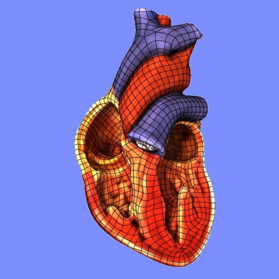 Human Heart Cross Section royalty-free 3d model - Preview no. 7
