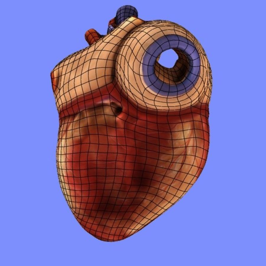 Human Heart Cross Section royalty-free 3d model - Preview no. 8