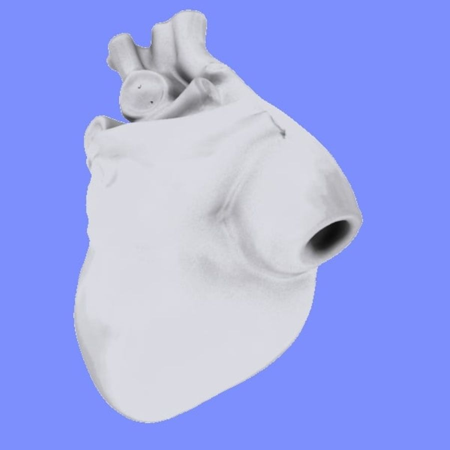Human Heart Cross Section royalty-free 3d model - Preview no. 6