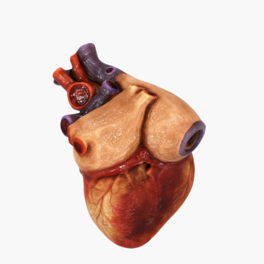 Human Heart Cross Section royalty-free 3d model - Preview no. 3