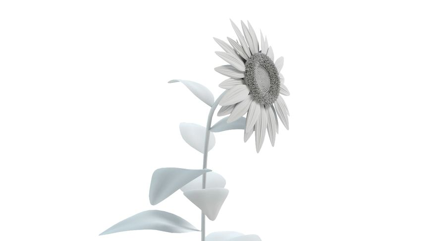 Sunflower royalty-free 3d model - Preview no. 11
