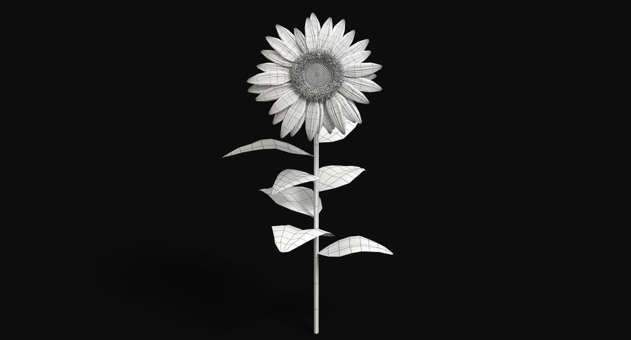 Sunflower royalty-free 3d model - Preview no. 12
