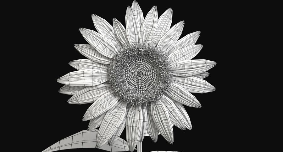 Sunflower royalty-free 3d model - Preview no. 13