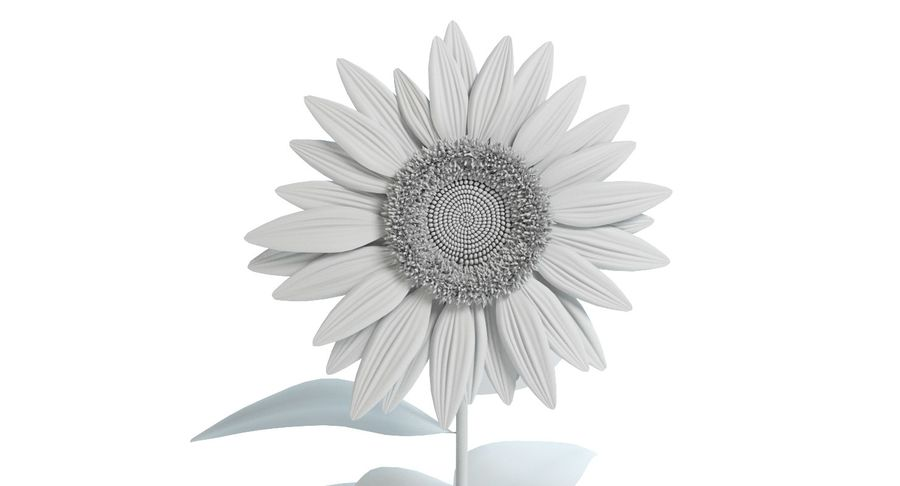Sunflower royalty-free 3d model - Preview no. 10