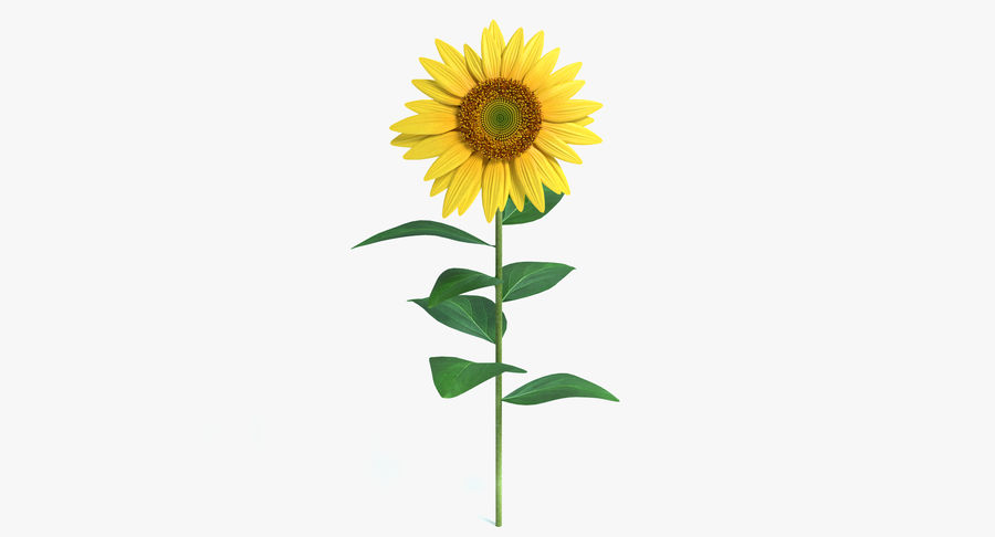 Sunflower royalty-free 3d model - Preview no. 2
