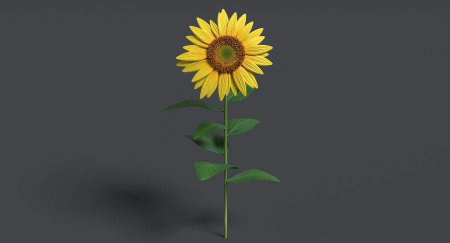 Sunflower royalty-free 3d model - Preview no. 3