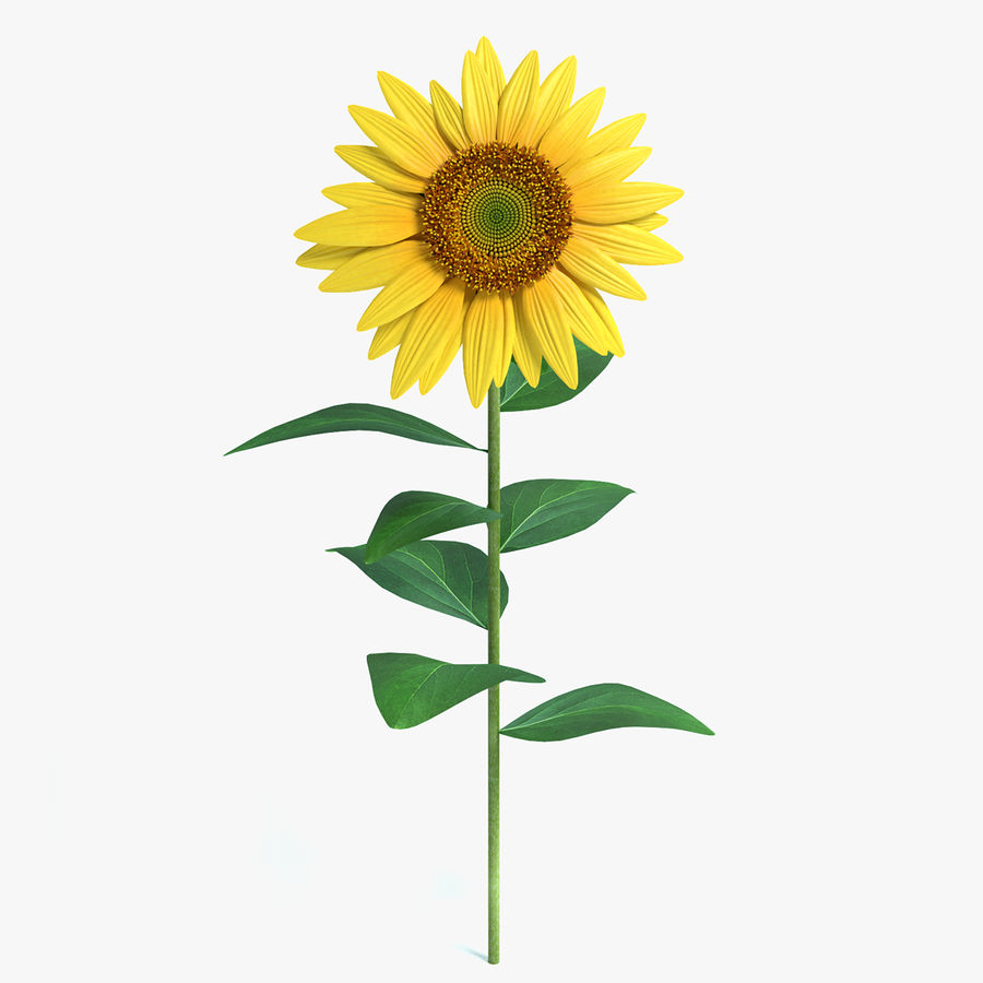 Sunflower royalty-free 3d model - Preview no. 1
