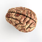 Human Brain - Cinema4D 3d model