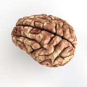 인간 두뇌 - Cinema4D 3d model