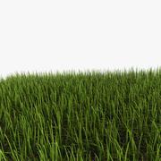 трава 3d model