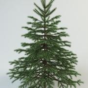 전나무 가문비 나무 3d model