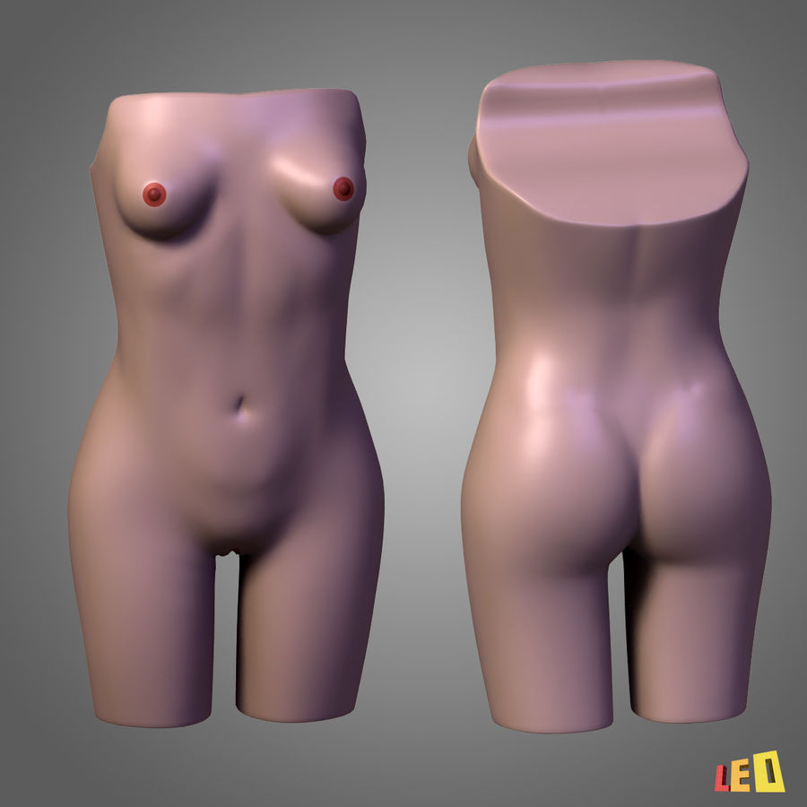 Corps des os urogénitaux royalty-free 3d model - Preview no. 2