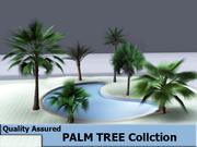 пальмовые деревья 3d model