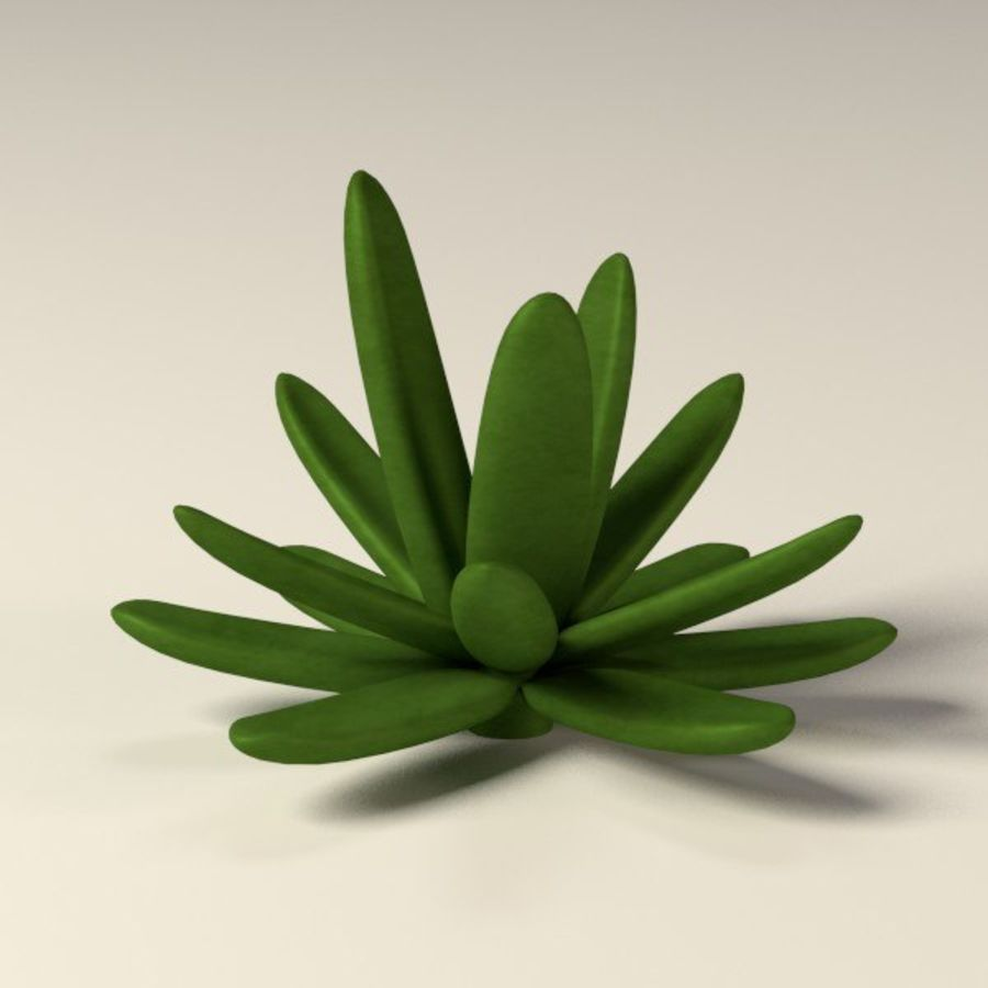 suculents royalty-free 3d model - Preview no. 2