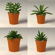 suculents+pots.c4d 3d model