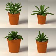 suculents + pots.c4d 3d model