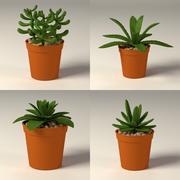 suculent+pots 3d model
