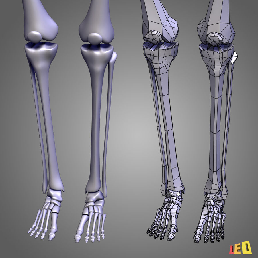 Leg muscles royalty-free 3d model - Preview no. 13