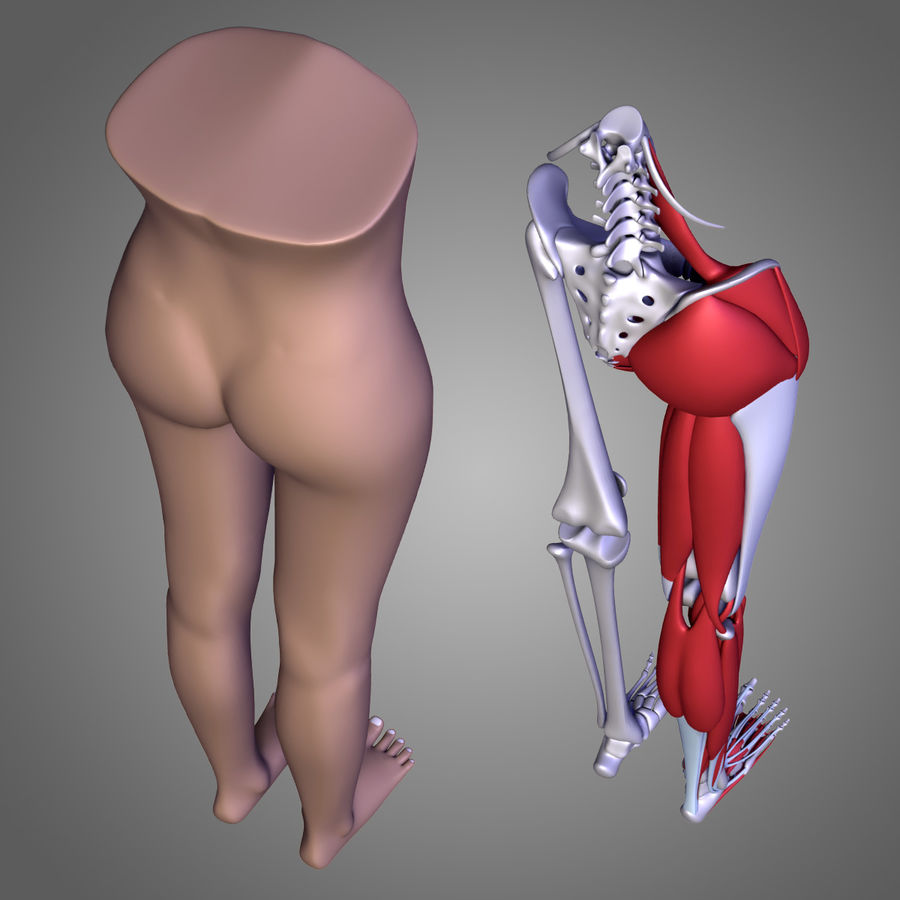 Leg muscles royalty-free 3d model - Preview no. 7