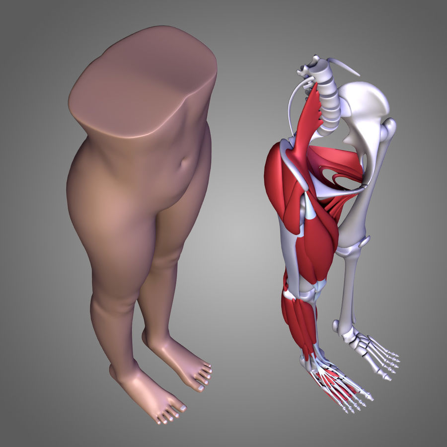 Leg muscles royalty-free 3d model - Preview no. 6