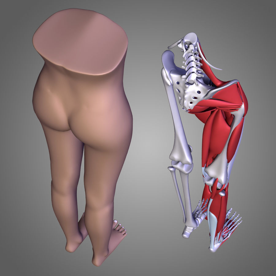 Leg muscles royalty-free 3d model - Preview no. 8
