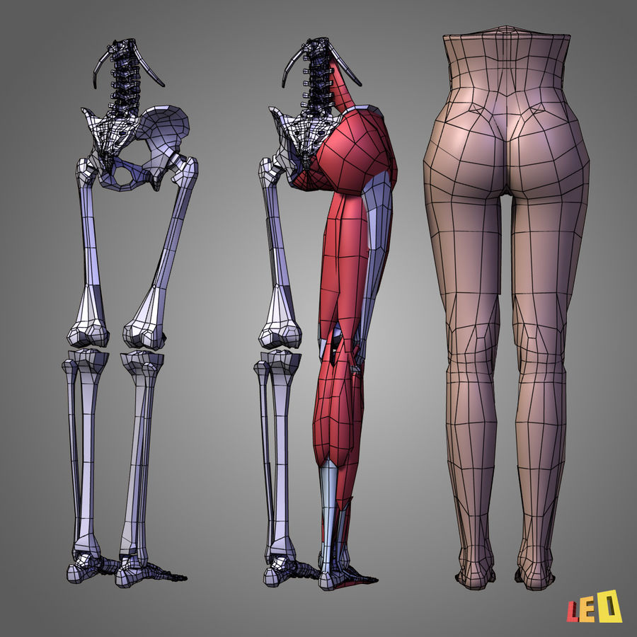 Leg muscles royalty-free 3d model - Preview no. 5