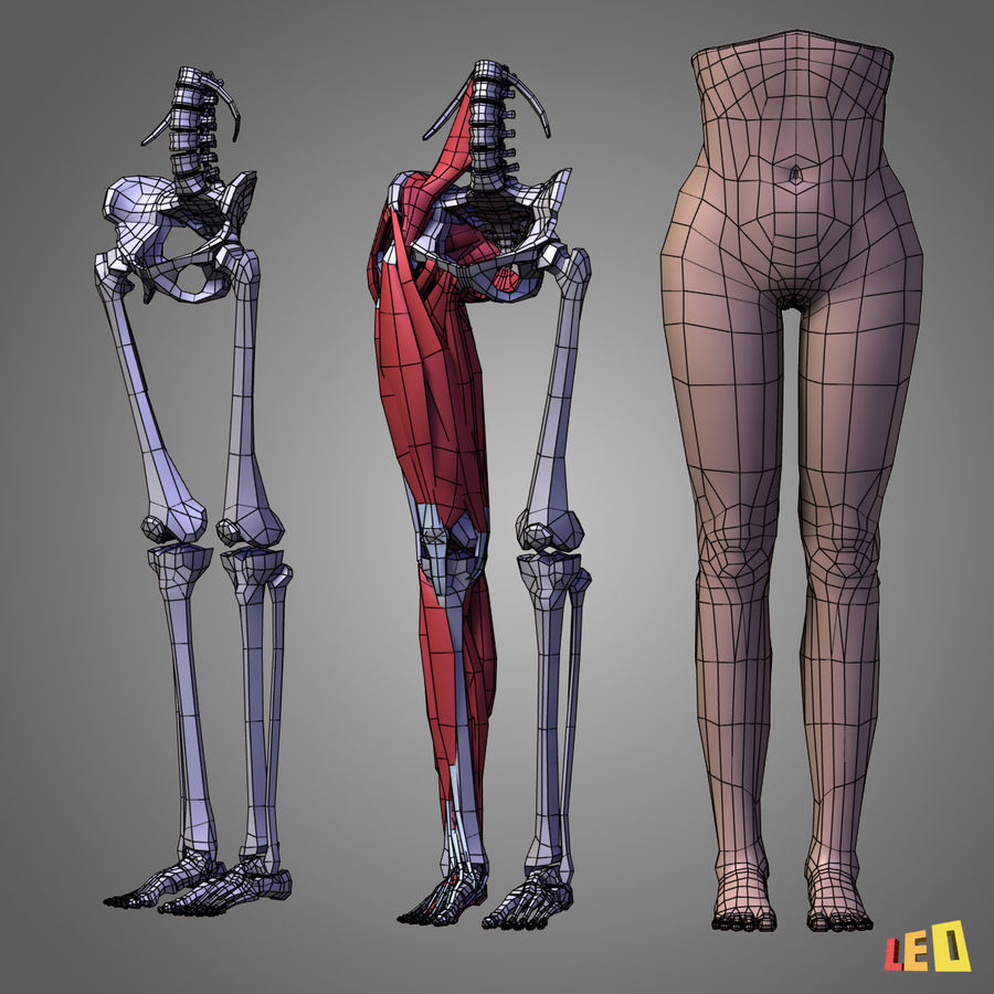 Leg muscles royalty-free 3d model - Preview no. 3