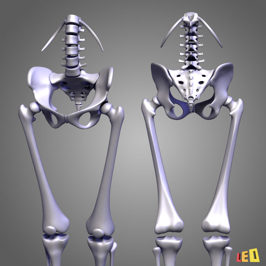 Leg muscles royalty-free 3d model - Preview no. 12