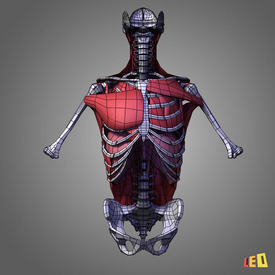 인체의 몸통 근육 royalty-free 3d model - Preview no. 4
