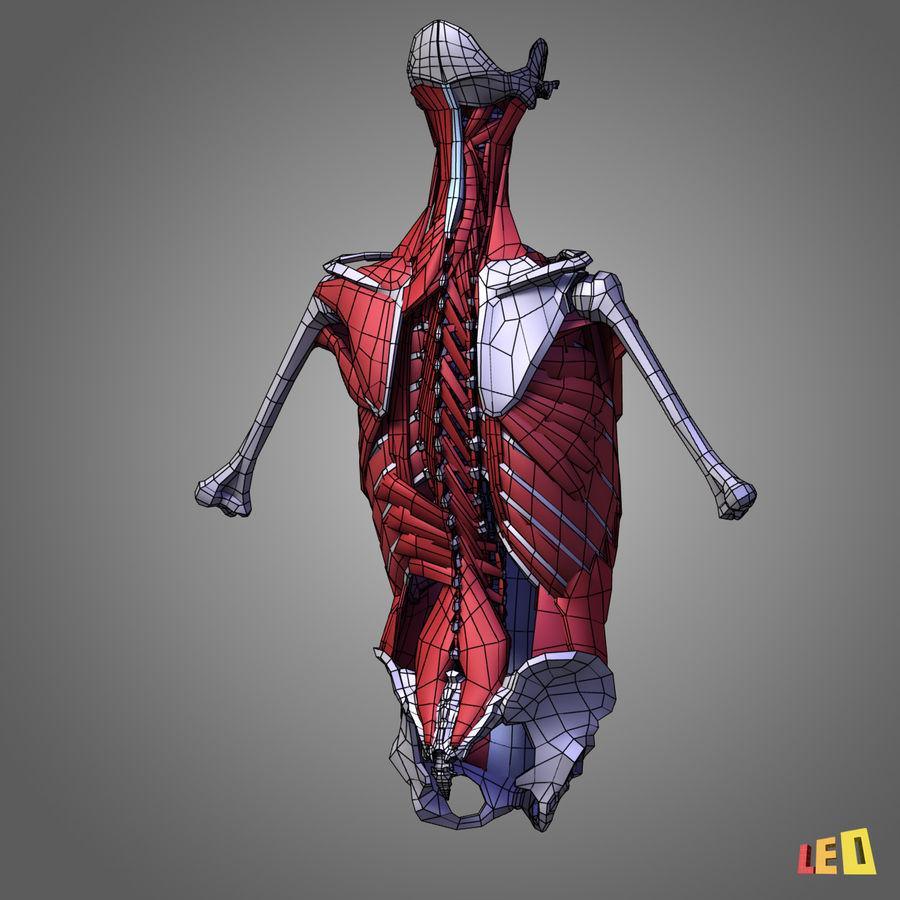 인체의 몸통 근육 royalty-free 3d model - Preview no. 9