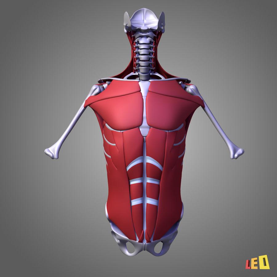 인체의 몸통 근육 royalty-free 3d model - Preview no. 2