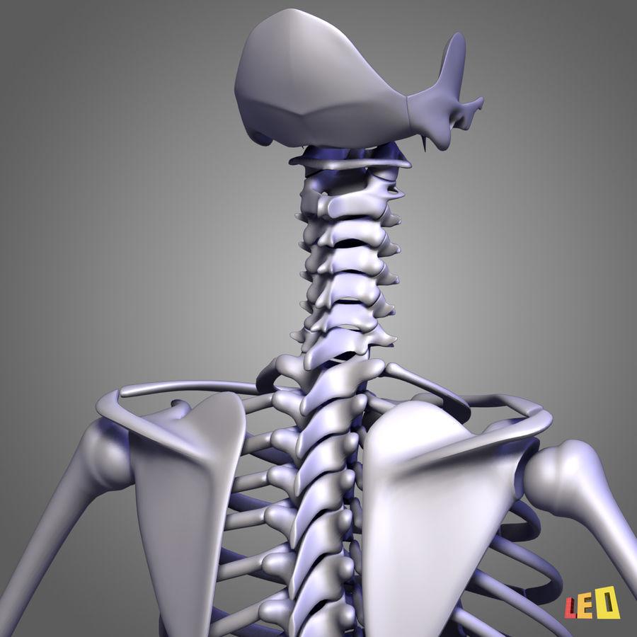 인체의 몸통 근육 royalty-free 3d model - Preview no. 15