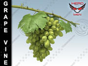 Grape Vine 3d model
