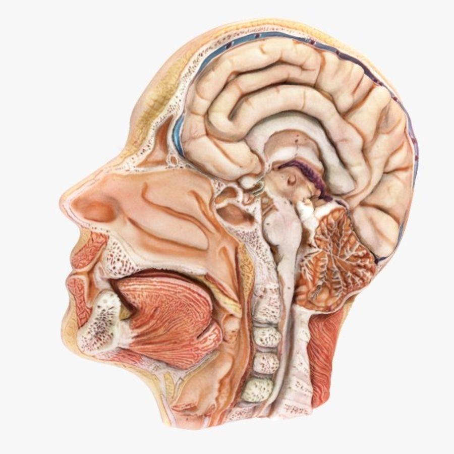 Human Head Lateral Slice 3D Model $25 - .max .obj - Free3D