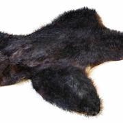 Skin bear 3d model