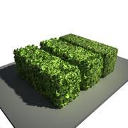 живая изгородь 3d model
