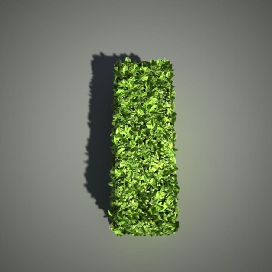 żywopłot royalty-free 3d model - Preview no. 5