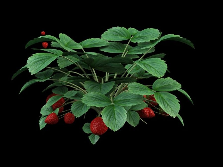 bacca di fragola royalty-free 3d model - Preview no. 3