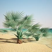 palma bismarcka 3d model