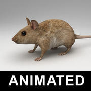 Mouse attrezzato 3d model