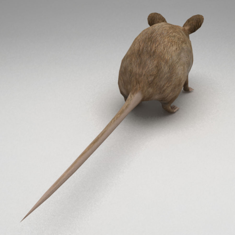 Mouse rigged royalty-free 3d model - Preview no. 7