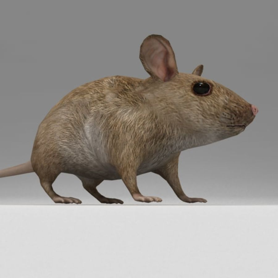 Mouse rigged royalty-free 3d model - Preview no. 6