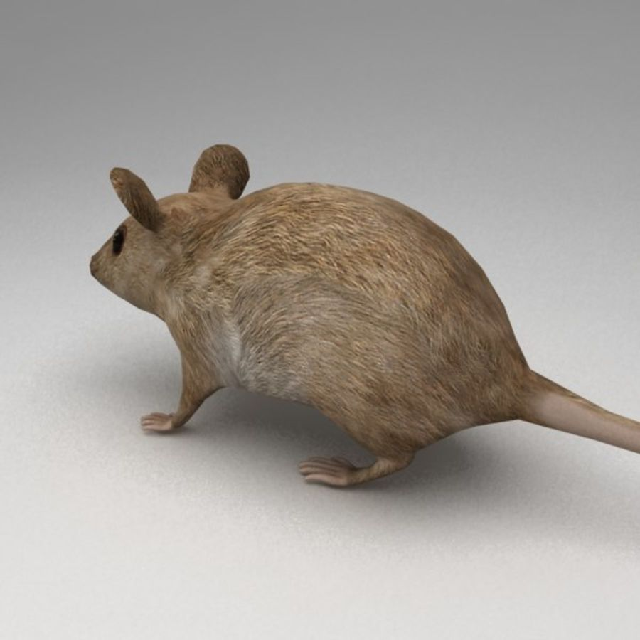 Mouse rigged royalty-free 3d model - Preview no. 4