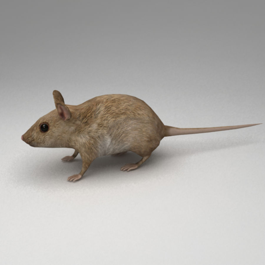 Mouse rigged royalty-free 3d model - Preview no. 3