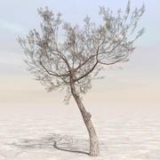 Afghanistan Tree 05 3d model