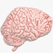 Beyin 3d model