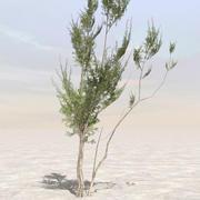 Afghanistan Tree 03 3d model
