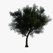 Generic Tree Lowpoly 3d model